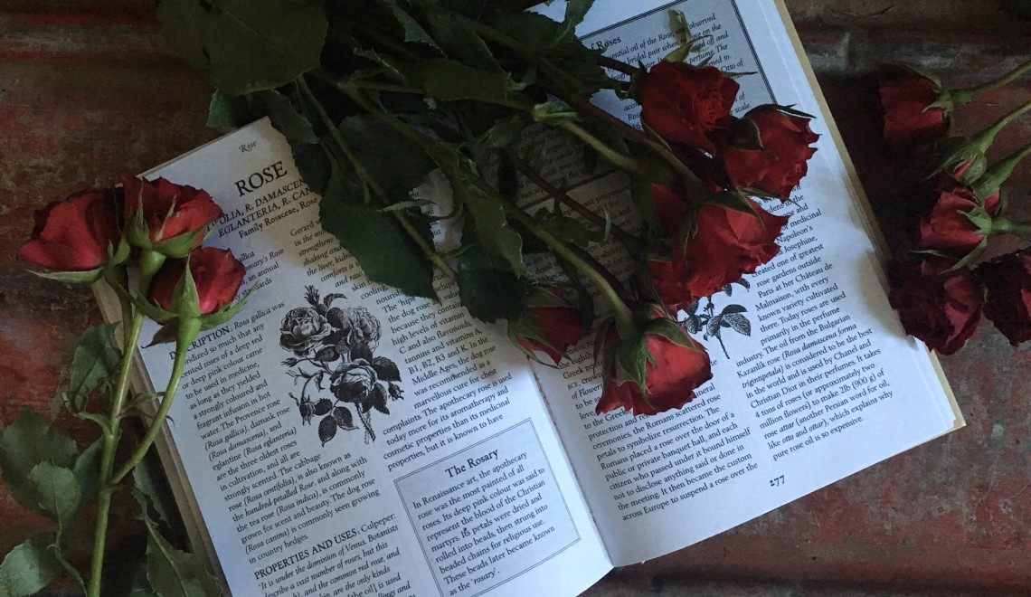 The rose represented by its description in an herbalism book strewn with a bunch of roses