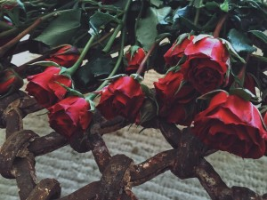 The rose represented by red roses laying on a table.