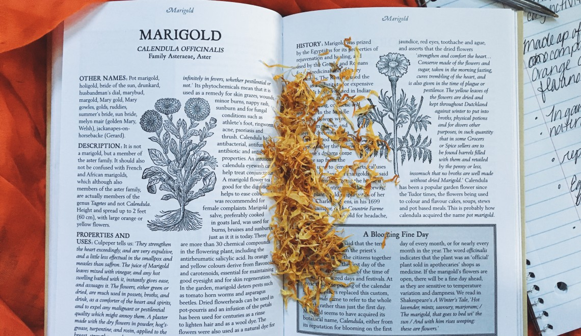 Herbalism book with dried Calendula flowers