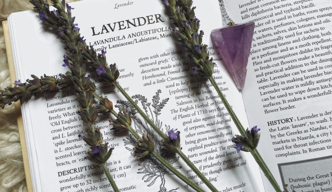 Herbs 101:  For the Love of Lavender