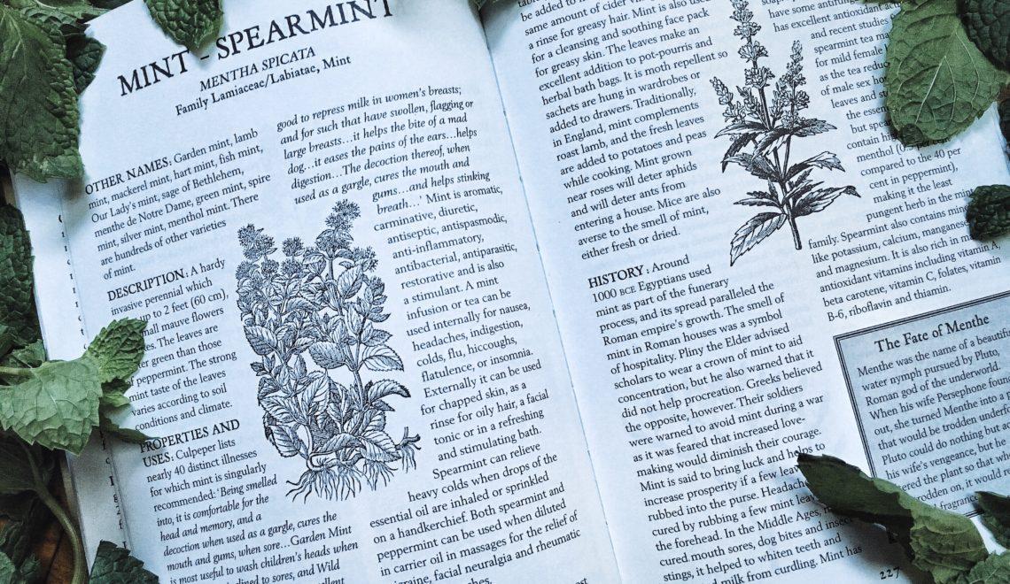 Herbs 101: Mindful Mint